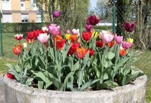 crav_2020_04_16_05_fleurs (Custom)